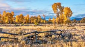 一个美好的秋天早晨在杰克逊霍尔,怀俄明,有金黄秋叶的 库存照片