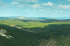 一个美好的风景和多云天空 杉木和落叶前面 免版税库存照片