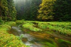 一个美妙地河流动的秋天森林 库存照片