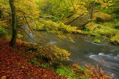 一个美妙地河流动的秋天森林 库存图片