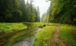 一个美妙地河流动的秋天森林 免版税库存照片