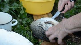 一个老妇人的手有刀子的切了鲤鱼 影视素材