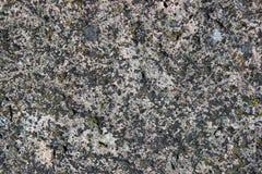 一个老岩石的表面 免版税库存照片