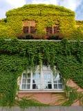 一个老房子的窗口有常春藤的在墙壁上在奥拉迪亚,罗马尼亚 图库摄影