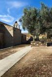 一个老教会的细节和一棵橄榄树在Idanha历史的村庄Velha在葡萄牙 免版税库存图片