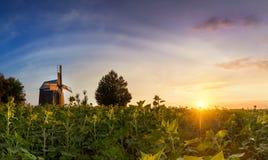 一个老木磨房的风景在一个领域的在五颜六色的日落钛 免版税库存图片