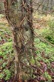 一个老树干在有青苔和新芽的一个公园 库存图片