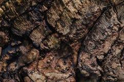 一个老树的黑暗的纹理 库存照片