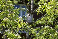 一个老鸟舍的照片在多枝树的在农舍 库存照片