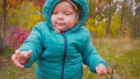 一个耳朵老孩子通过秋天公园和戏剧跑与花 常平架 影视素材