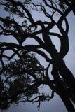 一个自然独特的树枝剪影 免版税库存图片