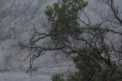一个自然独特的树枝剪影 库存照片