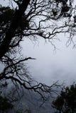 一个自然独特的树枝剪影 免版税图库摄影