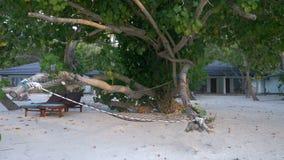 一个舒适吊床和一张躺椅在热带树树荫下在海滩在海滩平房的背景 影视素材