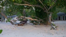 一个舒适吊床和一张躺椅在热带树树荫下在海滩在海滩平房的背景 股票视频