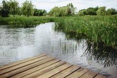 一个芦苇和一个蓝色湖的看法从桥梁的 库存图片