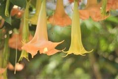 一个花喇叭在森林里 免版税库存图片