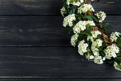 一个花圈的美丽的白色开花的Spirea arguta新娘植物在木桌上 平的位置,顶视图 免版税库存照片