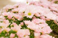 一个花植物群 库存图片
