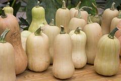 以一个花瓶的形式长方形南瓜在一个季节性市场赞成 库存照片
