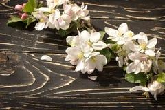 一个苹果的花在春天 免版税库存照片
