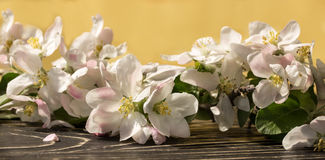 一个苹果的花在春天 免版税库存图片
