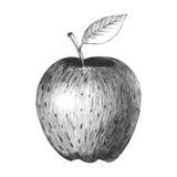 一个苹果 库存例证