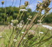 一个草甸在海德公园在一个晴天 免版税图库摄影