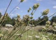 一个草甸在海德公园 免版税库存照片