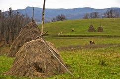 一个草甸的干草堆母牛牧场地的 免版税库存照片