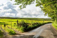 一个草甸的美丽的景色有绿草的在柏油路旁边的Burren 图库摄影