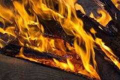 一个营火的煤炭在森林特写镜头的 库存照片