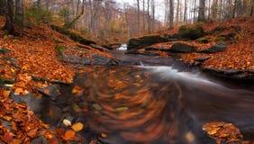 一个落的秋天森林的全景有很多红色叶子和一片快速的冷的小河和漩涡叶子的 库存照片