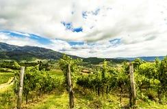 一个葡萄园在托斯坎乡下。 免版税库存照片