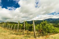 一个葡萄园在托斯坎乡下。 免版税库存图片