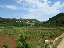 一个葡萄园在Lastovo在克罗地亚 免版税库存图片