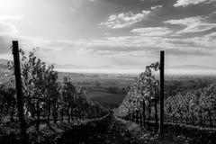 一个葡萄园的美好的第一人景色在秋天,下来 免版税图库摄影