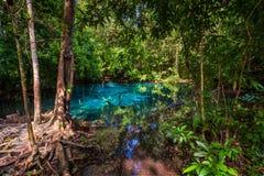 一个蓝色湖的看法在厚实的密林 免版税库存照片