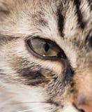 一个蓬松猫生存房子的画象 免版税库存图片