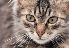 一个蓬松猫生存房子的画象 免版税图库摄影