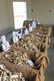 一个蘑菇供营商的立场蒙卡尔沃,意大利块菌市场的  库存照片