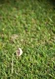 一个蘑菇在庭院里 免版税库存照片