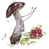 一个蘑菇的水彩例证用莓果 向量例证