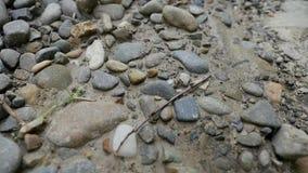 一个蚁丘的特写镜头在含沙地面的 影视素材