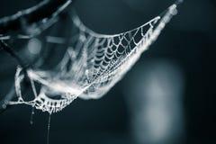 一个蜘蛛网的一个美丽的特写镜头在沼泽 与水滴的网在早晨光 美好的沼泽风景 免版税库存图片