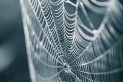 一个蜘蛛网的一个美丽的特写镜头在沼泽 与水滴的网在早晨光 美好的沼泽风景 库存图片