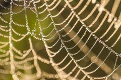 一个蜘蛛网的一个美丽的特写镜头在沼泽 与水滴的网在早晨光 库存图片