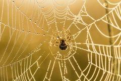 一个蜘蛛网的一个美丽的特写镜头在沼泽 与水滴的网在早晨光 库存照片