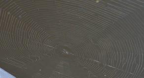 一个蜘蛛网的顶视图在一个黑暗,棕色湖的 免版税图库摄影