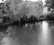一个蜘蛛网的黑白照片在湖和树前面的 图库摄影